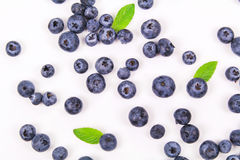 Fresh blueberry with leaf. On white background royalty free stock images