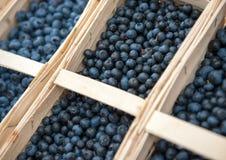Fresh blueberry Stock Images