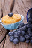 Fresh Blueberry Muffin Stock Photography