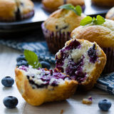 Fresh blueberry muffin Royalty Free Stock Photos