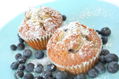 Fresh Blueberry Muffins Stock Images