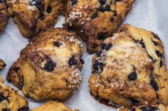 Fresh Blueberry Muffins Stock Photography