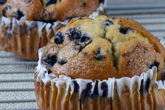 Fresh Blueberry Muffins on Rustic Burlap Royalty Free Stock Image