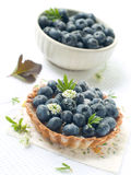 Fresh Blueberry Tart Royalty Free Stock Photos