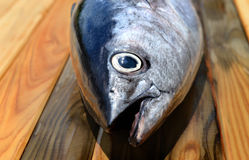 Fresh bluefin tuna from market. On wooden photo in sunlight Royalty Free Stock Images