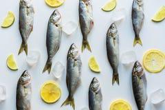 Fresh bluefish with lemon on white. Fish pattern. View from above. Fresh bluefish with lemon on white background. Fish pattern. View from above. Flat lay stock photo