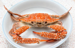 Fresh boiled crab Stock Images