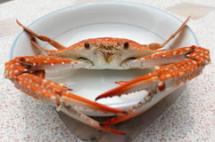 Fresh boiled crab Royalty Free Stock Image