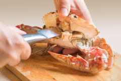 Fresh boiled crabs Stock Photography