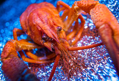 Free Fresh Boiled Crawfish Royalty Free Stock Image - 34907366