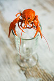Fresh boiled crawfish Stock Images