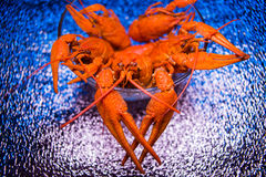 Fresh boiled crawfish Royalty Free Stock Photography