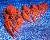Fresh boiled crawfish Royalty Free Stock Image