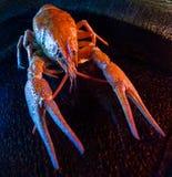 Fresh boiled crawfish Stock Photo