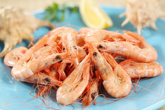 Fresh boiled prawns Royalty Free Stock Photos