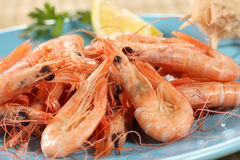 Fresh boiled prawns Stock Image
