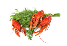 Fresh boiled red crayfish with dill isolated on white background stock photography