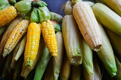 Fresh boiled and roasted corns with peels Stock Photos