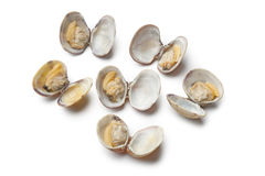 Fresh boiled seashells Stock Images