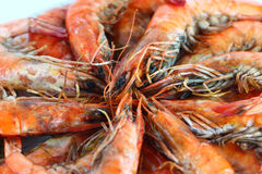 Fresh boiled shrimp Stock Photography