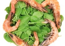 Fresh boiled shrimps with basil. Royalty Free Stock Images