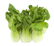 Fresh bok choi Royalty Free Stock Images