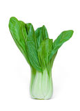 Fresh Bok choy Royalty Free Stock Images