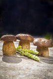 Fresh Boletus Edilus mushrooms on a wooden table Royalty Free Stock Images