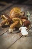 Fresh Boletus Edilus mushrooms on a wooden table Royalty Free Stock Photography