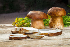 Fresh Boletus Edilus mushrooms on a wooden table Stock Image