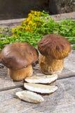 Fresh Boletus Edilus mushrooms on a wooden table Royalty Free Stock Photos