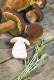 Fresh Boletus Edilus mushrooms on a wooden table Royalty Free Stock Photo