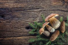 Fresh boletus edulis mushrooms with spruce bunch and cones on rustic woden table Stock Images