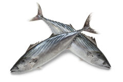 Fresh bonito fishes. At white background Royalty Free Stock Image