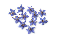 Fresh borage flowers Royalty Free Stock Photography