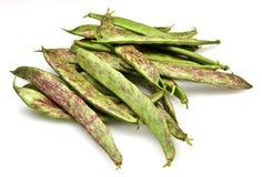 Fresh Borlotti Beans Royalty Free Stock Photography