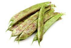 Fresh Borlotti Beans Royalty Free Stock Image