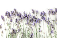 A fresh bouquet of blooming lavender flowers, shot from above on a white background