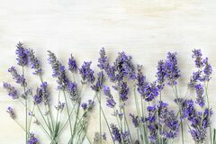 A fresh bouquet of blooming lavender flowers, shot from the top on a white wooden background
