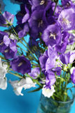 Fresh bouquet of blue and white bell flowers Stock Photos