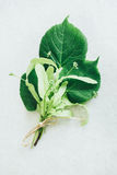 Fresh bouquet bud of linden on the white paper Stock Image