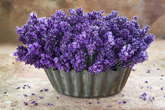 Fresh bouquet of lavenders Royalty Free Stock Photos