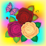 Fresh bouquet of motley roses with butterfly and two ladybird. Red purple yellow rose Stock Photography