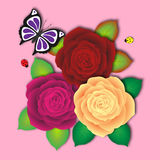 Fresh bouquet of motley roses with butterfly and two ladybird. Red purple yellow rose Royalty Free Stock Photography