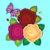 Fresh bouquet of motley roses with butterfly and two ladybird Royalty Free Stock Images