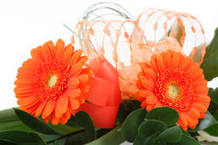 Fresh bouquet from orange gerbers Royalty Free Stock Photography