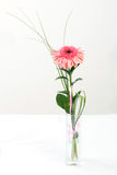 Fresh bouquet from pimk gerbers Royalty Free Stock Photo