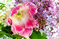 Fresh bouquet with pink terry tulip, white and purple lilac Royalty Free Stock Photos