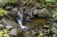 Fresh Boyana waterfalls in deep forest and rock. Vitosha, Bulgaria Stock Image
