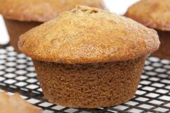 A fresh bran muffin Stock Photos
